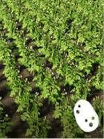 Корнеплоды в Farming Simulator 19